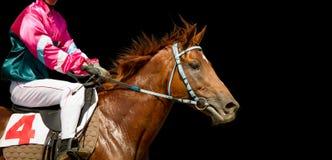 在一匹在黑背景隔绝的良种马奔跑的Jokey 图库摄影