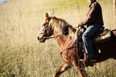 在一匹马的车手在秋天领域 库存照片