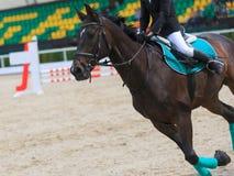 在一匹黑公马的车手在体育场内疾驰 图库摄影