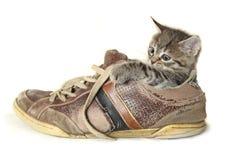 在一双大鞋子的小猫 免版税图库摄影