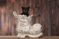 在一双老起动鞋子的可爱的小猫在木背景 免版税库存图片