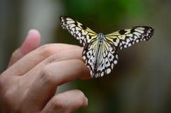 在一只女性手上的蝴蝶 库存图片
