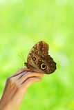 在一只女性手上的蝴蝶 图库摄影