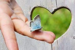 在一只手上的蓝色蝴蝶在与心脏的木背景中 库存图片