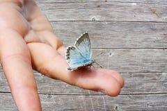 在一只手上的蓝色蝴蝶在木背景中 图库摄影
