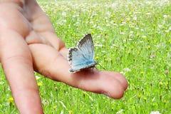 在一只手上的蓝色蝴蝶在绿色草甸背景中 免版税库存照片