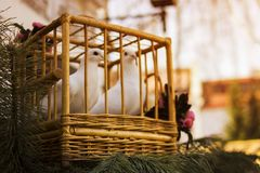 在一只木笼子的白色鸠 在笼子的鸟 库存照片