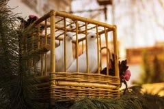 在一只木笼子的白色鸠 在笼子的鸟 免版税库存照片