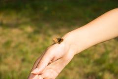 在一只柔和的少女` s手上的一只小的无防御的蝴蝶 库存图片