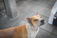 在一只流浪狗的眼睛的选择聚焦 库存照片