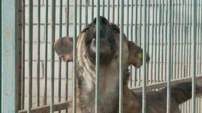 在一只笼子的一条狗在狗托儿所或风雨棚 影视素材