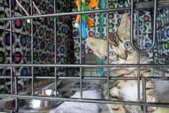 在一只笼子的哀伤的小猫在等待一名新所有者的动物庇护所中 库存图片
