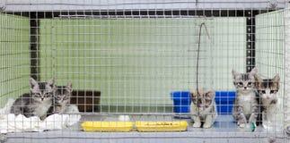 在一只笼子的小猫在动物庇护所 免版税库存图片