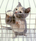 在一只笼子的小猫在白色背景 库存照片
