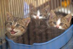 在一只笼子的小猫在风雨棚 免版税库存照片