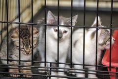 在一只笼子的小猫在风雨棚 库存图片