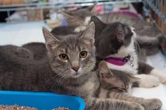 在一只笼子的无家可归的小猫在风雨棚 免版税库存照片