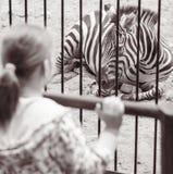 在一只笼子附近的女孩与斑马在动物园里 库存照片