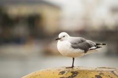 在一只脚的鸟 免版税图库摄影