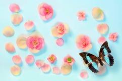 在一只蓝色背景和蝴蝶的美丽的花 库存照片