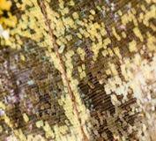 在一只蝴蝶的翼的图画作为背景 免版税图库摄影
