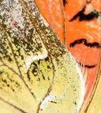 在一只蝴蝶的翼的图画作为背景 免版税库存图片