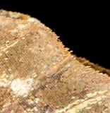 在一只蝴蝶的翼的图画作为背景 免版税库存照片