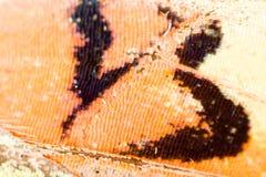在一只蝴蝶的翼的图画作为背景 图库摄影