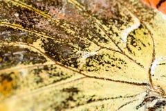在一只蝴蝶的翼的图画作为背景 库存照片
