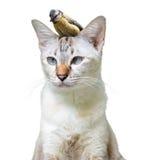 在一只逗人喜爱的猫和小的鸟之间的异常的宠物友谊,隔绝在白色背景 免版税库存图片