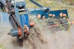 在一台拖拉机的特别设备开掘的土豆 免版税图库摄影