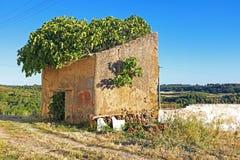 在一台老风车的橄榄树 库存照片