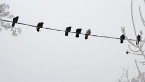 在一团电线的鸟在天空 影视素材