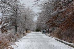 在一场冻雨风暴以后的公园胡同 库存照片