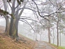 在一场雾的树沿在Kalemegdan公园的一条人行道在贝尔格莱德 免版税库存图片