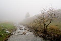 在一场雾的结构树在Steg 免版税库存图片