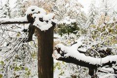 在一场风暴以后的残破的树在城市 免版税库存图片