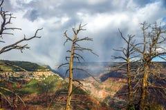 在一场暴雨前面的死的树在大峡谷谷 免版税图库摄影