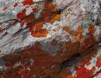 在一块唯一石头的自然色的样式与青苔和真菌 库存图片