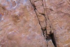 在一块唯一石头的自然色的样式与青苔和真菌w 免版税库存图片