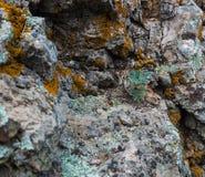 在一块唯一石头的自然色的样式与青苔和真菌w 库存照片