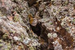 在一块唯一石头的自然色的样式与青苔和真菌w 库存图片