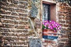 在一块土气窗口基石的桃红色花在佛罗伦萨 图库摄影