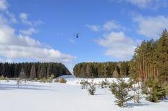 在一块大森林沼地的直升机 库存图片