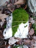 在一块大理石石头的绿色青苔 免版税库存图片