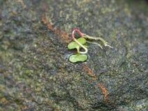 在一块大石头的一棵小草 库存图片