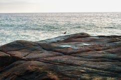 在一块大石头的小的鸟在海洋背景  免版税库存照片