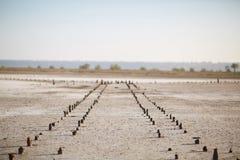 在一块干一块土地的残破的码头 库存图片
