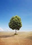 在一块干陆的一棵树 免版税库存图片