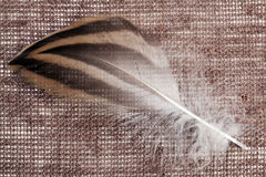 在一块棕色帆布的一根鸭子羽毛 免版税库存图片
